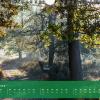"""Monatsbild November des Kalenders """"5 Jahreszeiten der Heide"""""""
