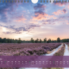 "Monatsbild Februar des Kalenders ""Heideblüte"""