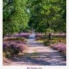 Titelbild der Literarischen Heidekalenders 2022